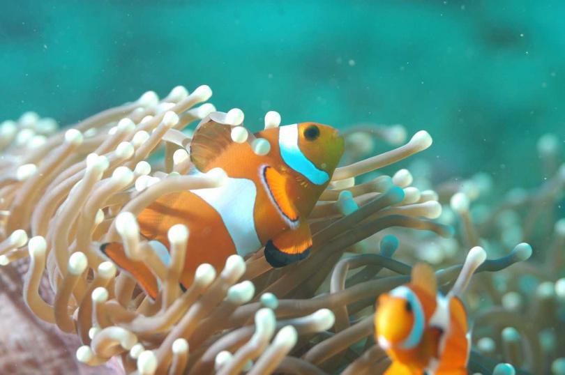 帛琉為國家地理雜誌評選為一生必去的50個景點之一。