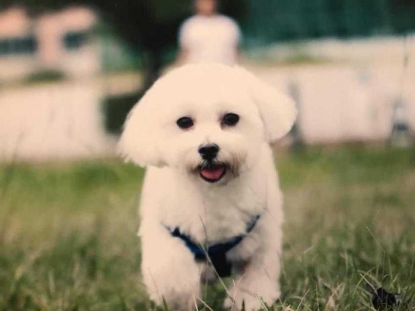 陪伴15年的愛犬「哈姆」在去年過世,讓蔡逸帆非常傷心難過。(圖/艾迪昇提供)