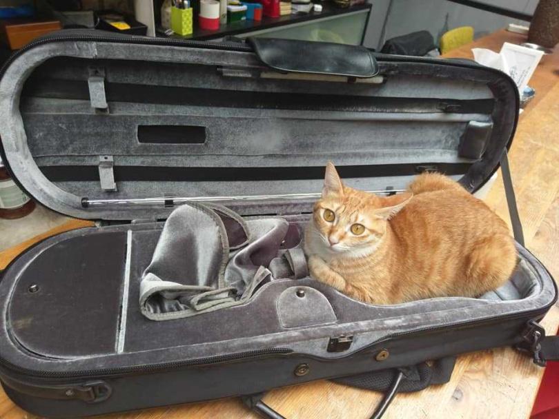 除了錄音間之外,余荃斌說整個家全部都是貓的活動空間,也隨牠們把吉他盒當作藏身之處,非常寵貓。(圖/艾迪昇提供)