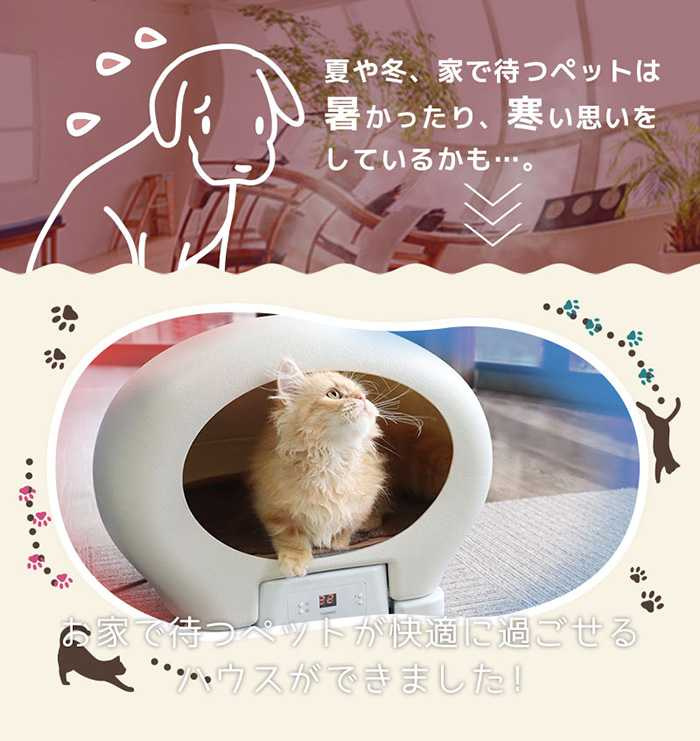 (圖/翻攝自ascii-store,下同)