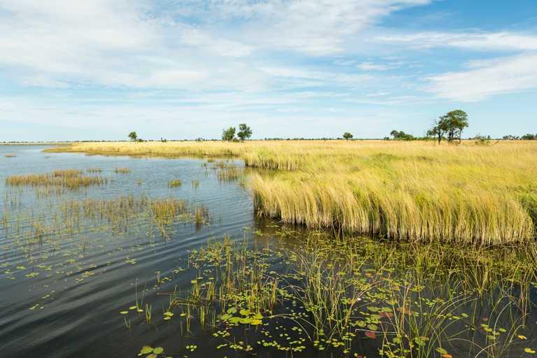 位於波札那西北部的奧卡萬戈三角洲,為非洲野生動物最集中的綠洲之一。(圖╱DE BEERS提供)