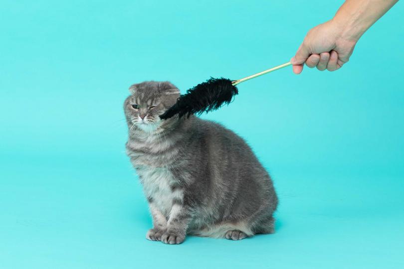 愛貓的林義傑,最喜歡待在家裡陪貓逗貓吸貓。(圖/彭子桓攝)