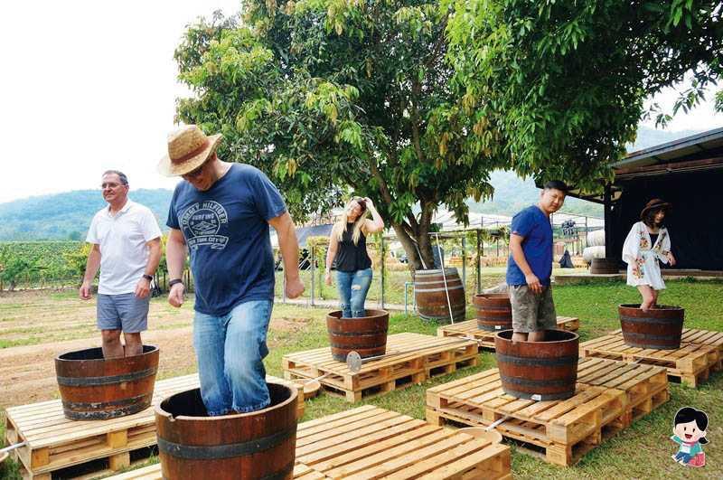 親自摘葡萄、踩葡萄以製作紅酒,是在Monsoon Valley Vineyard葡萄酒莊園的特殊體驗。(圖片/PEKO の Simple Life提供)