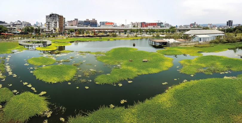 占地3公頃的「星泉湖」,除了造型水草,不時可見灰鷺、蜂鳥與小鸊鷉等鳥類來此棲息。(圖/于魯光攝)