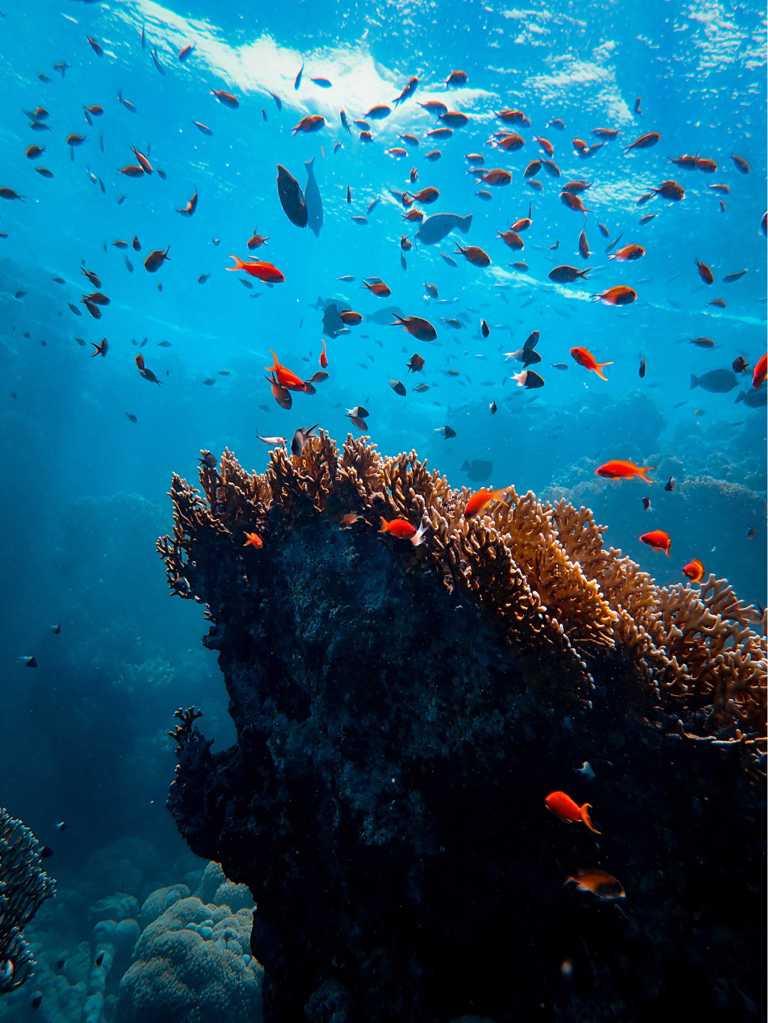 BLANCPAIN《Edition Fifty Fathoms》專刊,海底攝影精選作品。(圖╱BLANCPAIN提供)