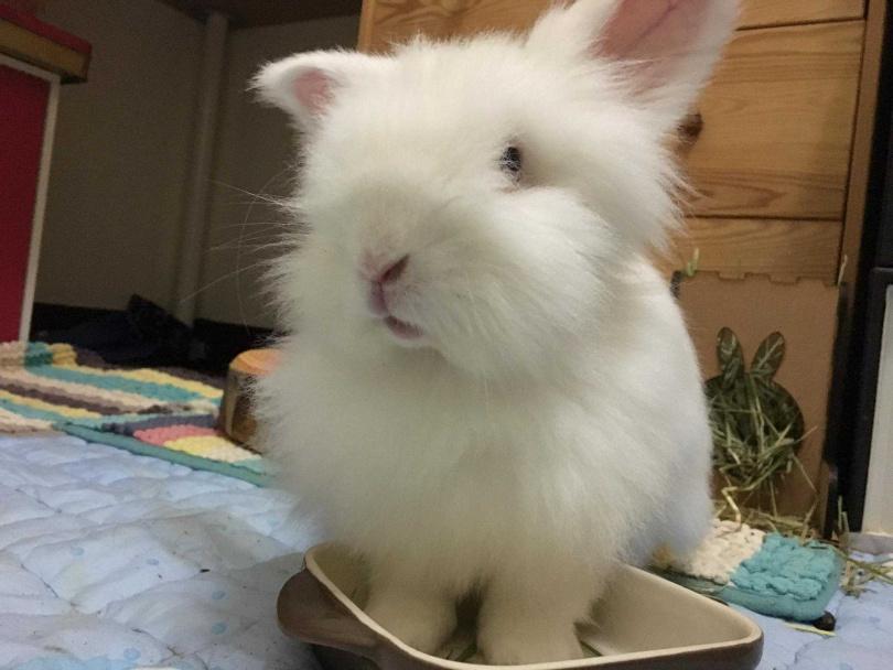 同樣是位帥哥的小羊駝,是Jo從「愛兔協會」領養來的,如今去彩虹橋奔跑2年了!