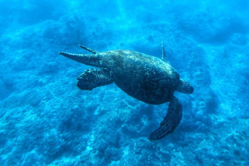 有機會的話,能與海龜相見歡。(圖/KLOOK提供)