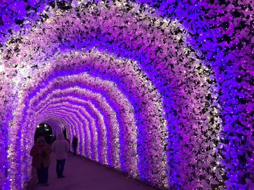 晨靜樹木園五色星光夜燈。(圖/KKday提供)