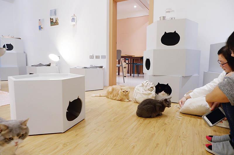 貓的生活提案,地址:宜蘭縣羅東鎮公正街32號,電話:(03)955-1766。