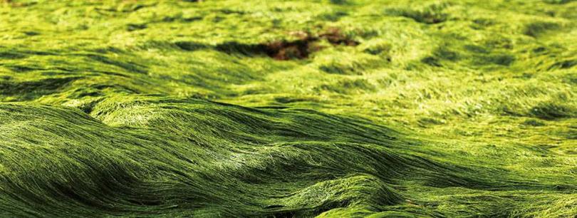 綠石槽地景因覆蓋大量綠藻猶如絨毛般,十分療癒。(圖/于魯光攝)