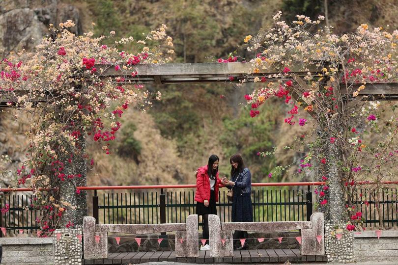 谷關吊橋旁的觀景平台可欣賞附近的群山,正好有九重葛等花朵盛開,增添美感。(圖/于魯光攝)