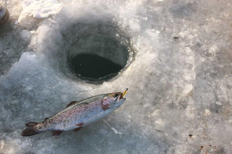 遊玩韓國的不可錯過的冰釣慶典-「平昌鱒魚節」。(圖/韓國觀光公社)