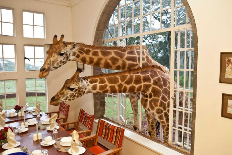 (圖/翻攝自Giraffe Manor臉書)