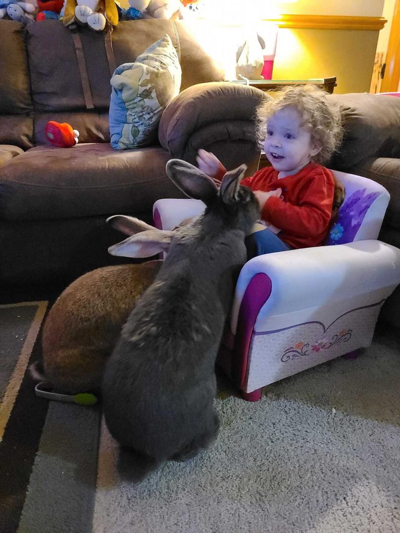 圖片來源:Rabbitatforhumanity