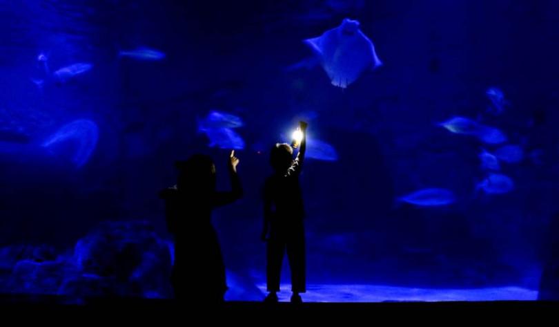 旅客在「夜探海洋」活動中可探訪夜間水族館。