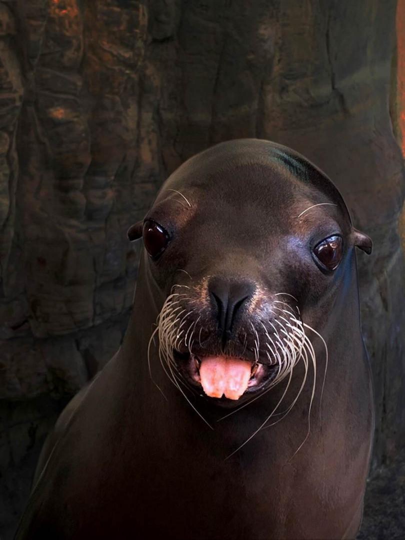 「夜探海洋」行程中的另一個行程是探訪海獅,並有機會獲得合照。