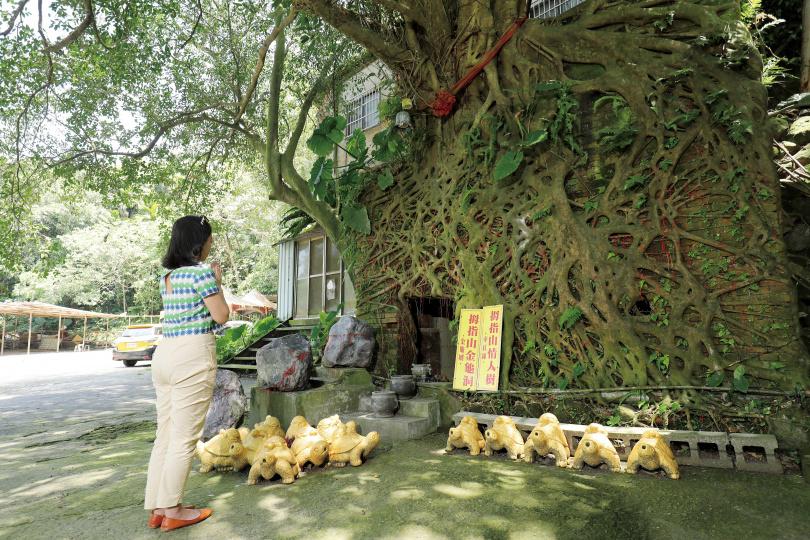 「拇指山情人樹」下方有個「金龜洞」,不少單身男女來此祈求良緣。(圖/于魯光攝)