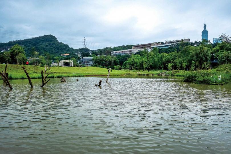 「永春陂溼地公園」重現百年前的埤塘樣貌,還可以遠眺台北101大樓。(圖/焦正德攝)