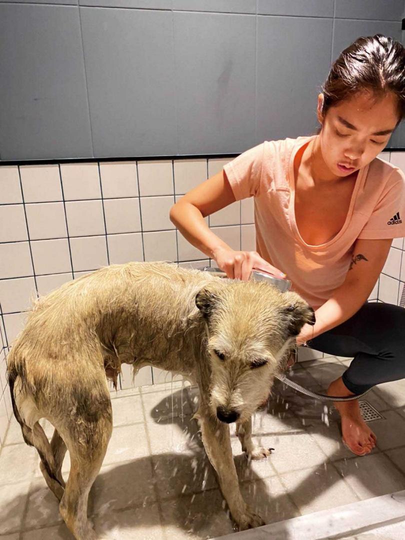 大霈將波波當成小孩照顧,凡事親力親為,連洗澡都不假手他人。(圖/大霈提供)