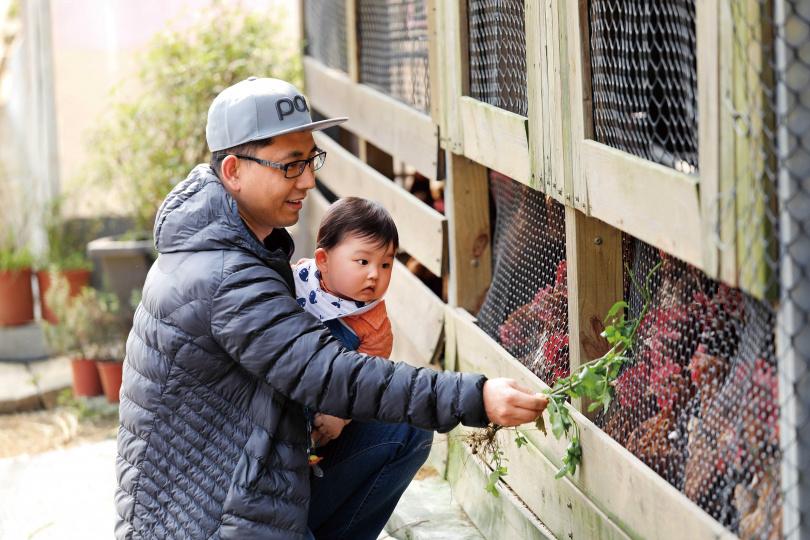 遊客在「遠足生態農場」,可體驗以咸豐草葉餵食蛋雞。(攝影/于魯光)
