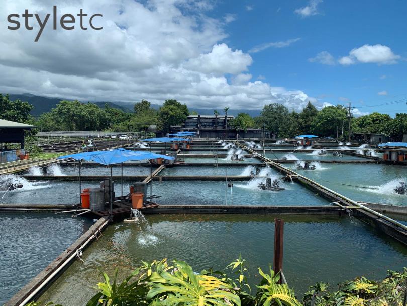 走訪宜蘭員山八甲魚場,為全台最大香魚養殖場。(圖/官其蓁攝)