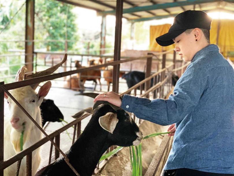 喜愛動物的張懷云,每天清晨都會去農場打掃餵食,和小羊近距離接觸。(圖/張懷云提供)