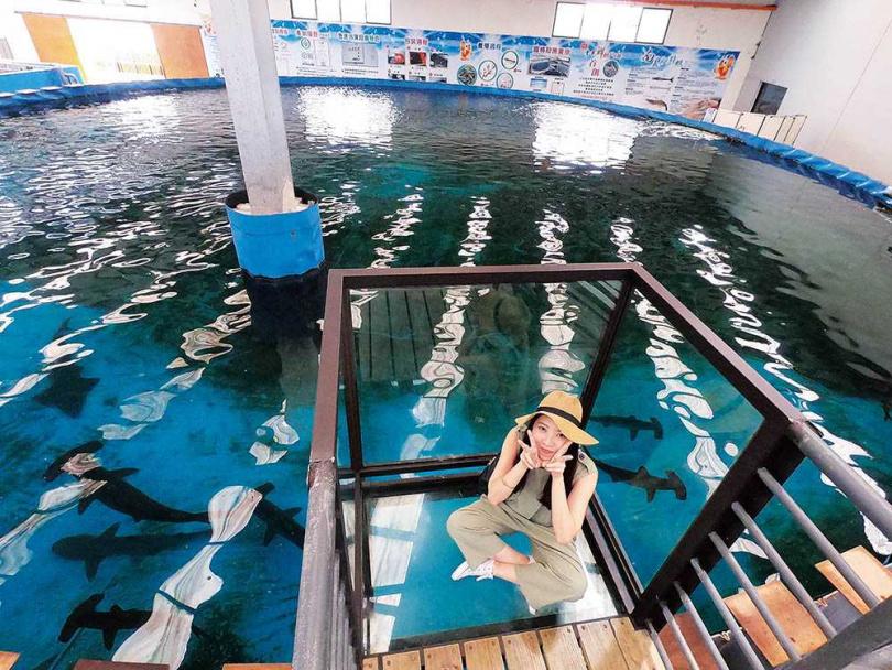 不需要全副武裝的潛水設備,站在透明看台上,就能近距離觀賞鯊魚和魟魚游來游去。(圖/于魯光攝)