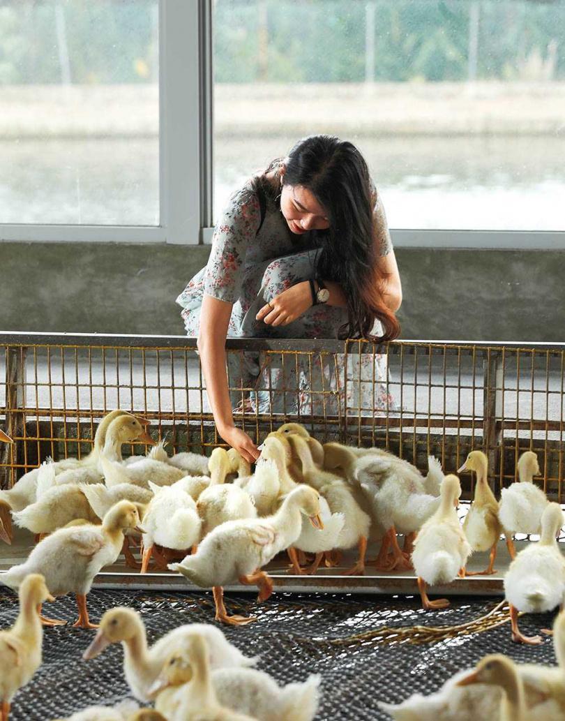 將飼料放在手中,鴨子們便會瘋狂地啄食,相當有趣!(飼料50元/罐)(圖/于魯光攝)