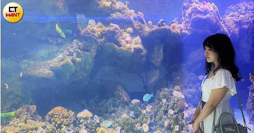 「珊瑚潛行」結合繽紛光影,展現珊瑚礁各式各樣的樣貌。(圖/官其蓁攝影)
