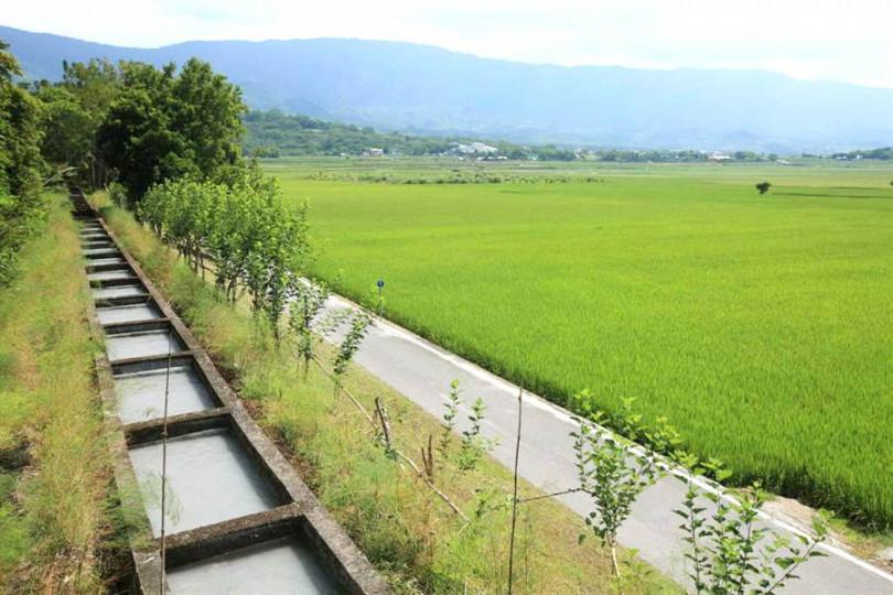散步池上大圳,享受鄉村綠意。