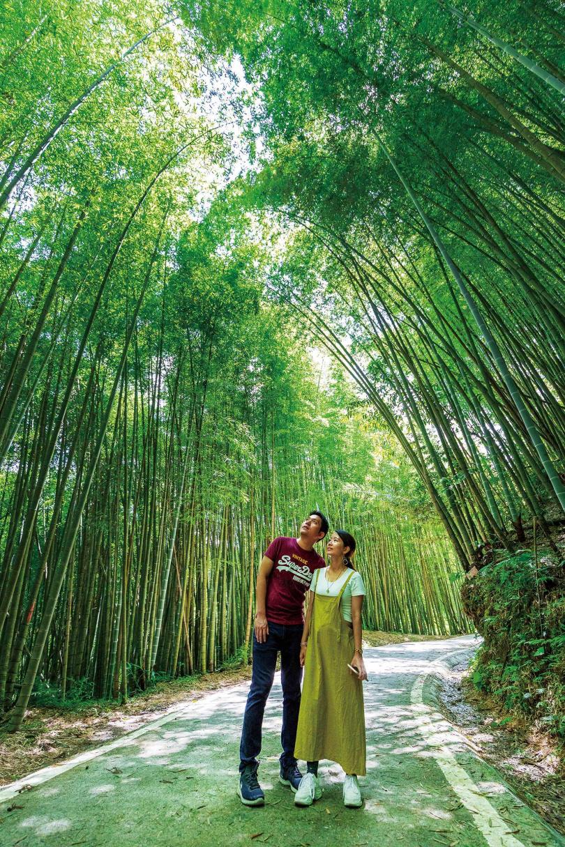 蓊鬱的「綠色隧道」,宛如日本嵐山「竹林之道」的翻版。(圖/焦正德攝)