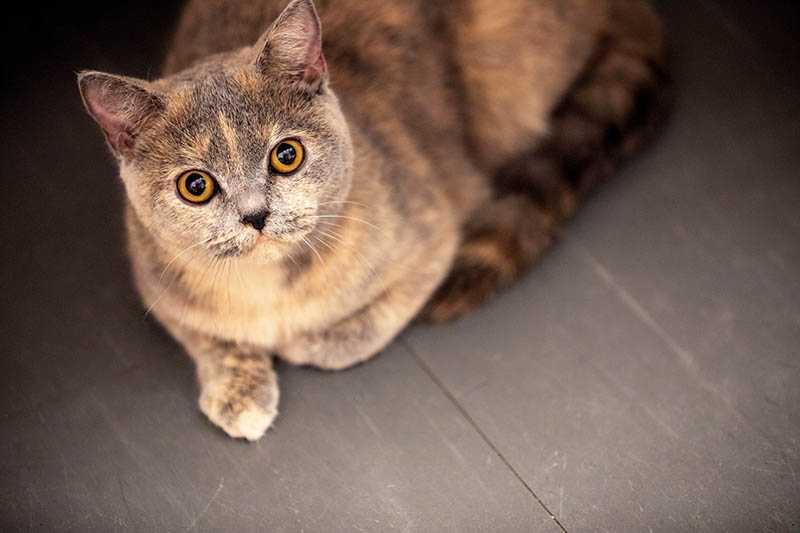 極度親人的花灑,是邱昊奇口中的「公關貓」,面對鏡頭也毫不害怕。(圖/張祐銘攝)