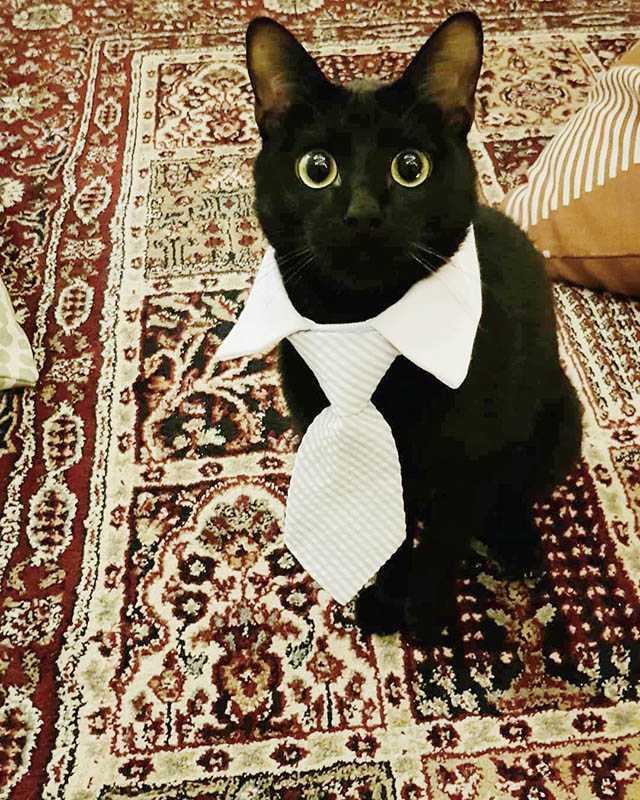 在邱昊奇眼中,黑貓神祕優雅,有種莫名的魅力。(圖/翻攝自邱昊奇臉書)