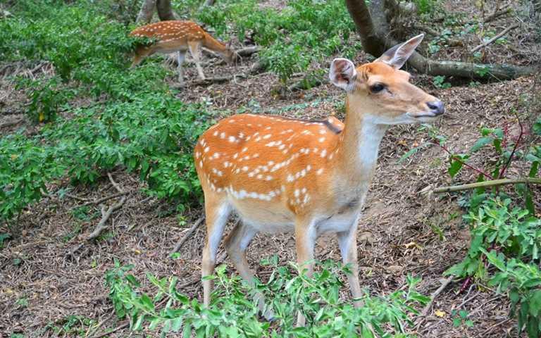除了戰地風光,馬祖也有豐富的生態。