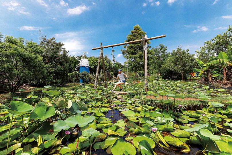 「蓮荷園休閒農場」在蓮池中設置鞦韆,是網美必拍的景點。(圖/焦正德攝)