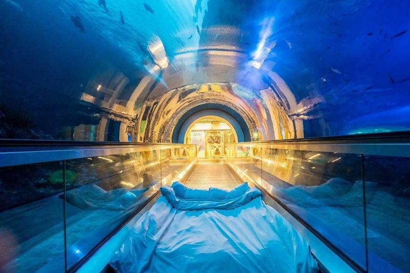 夜宿海生館—海底隧道。 (圖/屏東海生館提供)