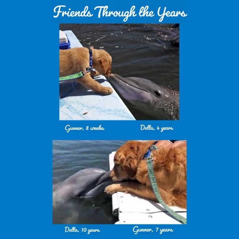 圖片來源:Dolphin Research Center