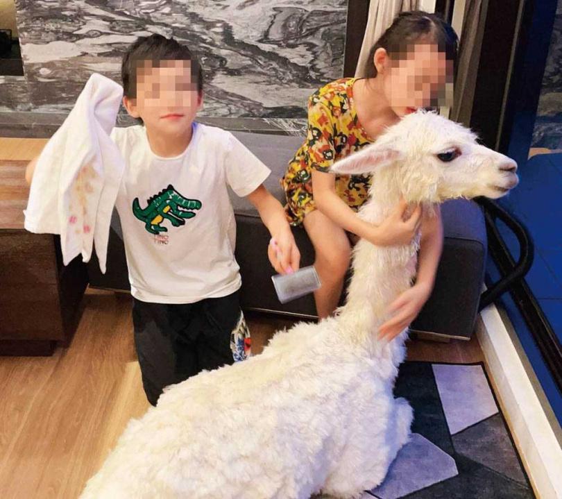 有家人和毛孩的陪伴,在家防疫期間王宥忻每天相當充實忙碌。(圖/固力狗娛樂提供)