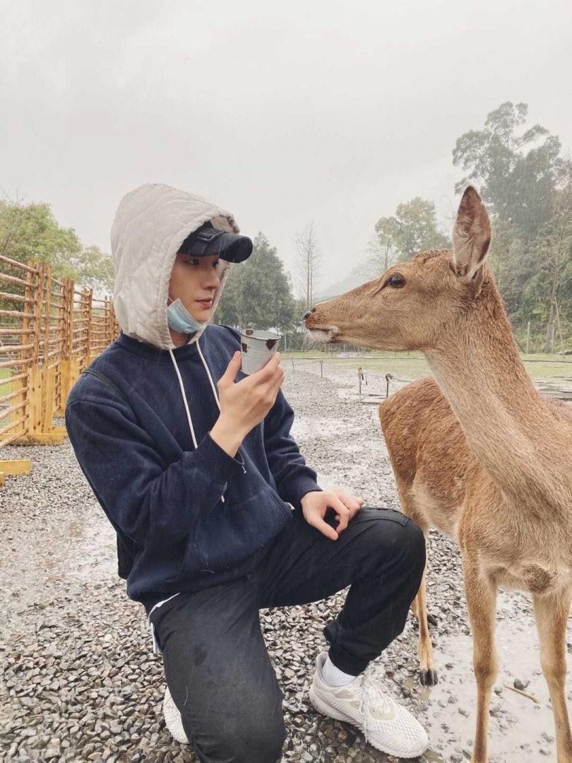 相較於日本的鹿群,宜蘭的小鹿溫馴許多。(圖/周子娛樂)