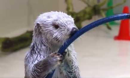 圖片來源:鳥羽水族館