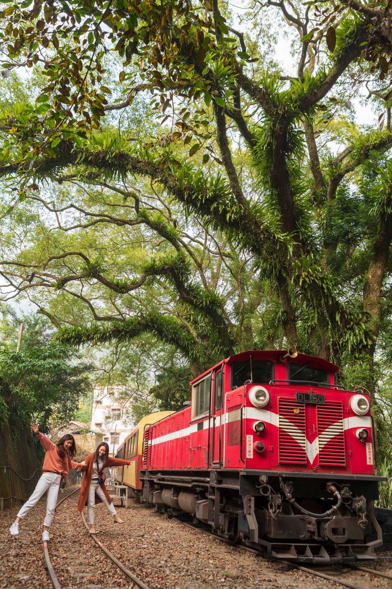 在整排老樟樹環抱下的「樟腦寮車站」,是觀賞火車從獨立山環繞下山的絕佳地點。(圖/林士傑攝)