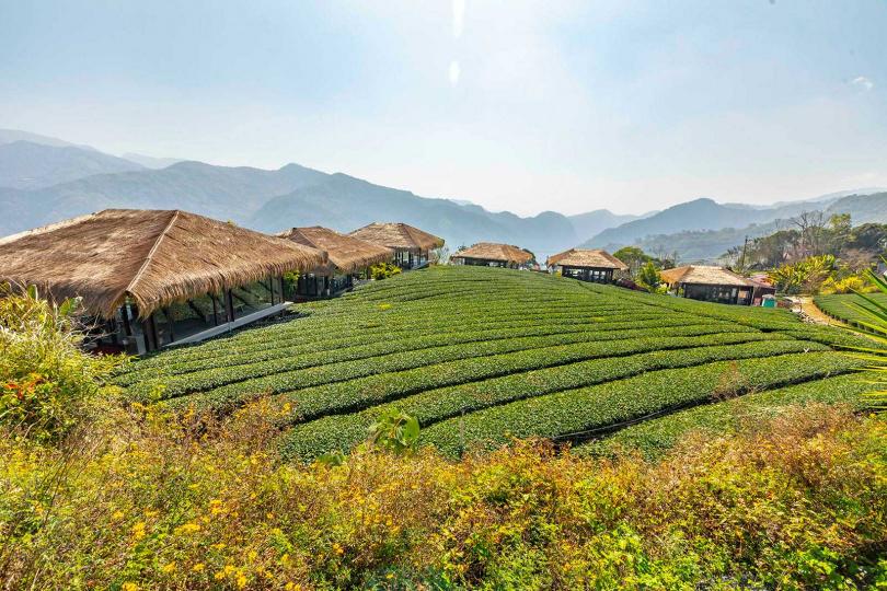 漫遊在「YUYUPAS 優遊吧斯」的遼闊茶田,眼前是連綿群山之景,令人心曠神怡。(圖/林士傑攝)