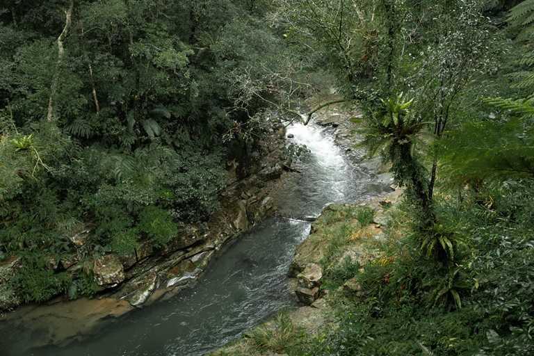 「金瓜寮蕨類步道」流水潺潺,難度不高,走起來十分舒適。