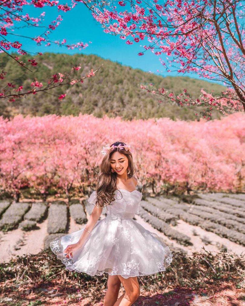 櫻花盛開時的武陵農場,形成粉紅色的花海世界。(圖/KLOOK提供、圖片授權IG @ooo_lin_ooo)