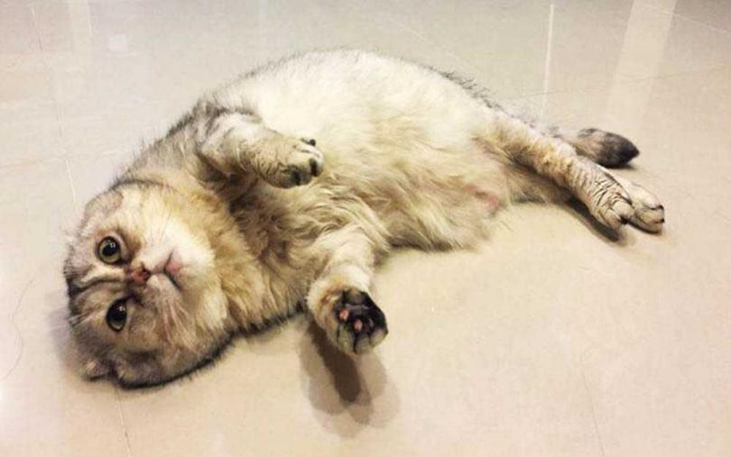 3年前林芯儀的愛貓貝貝過世,讓她曾打算不再養寵物,深怕再次經歷生離死別。(圖/翻攝林芯儀臉書)