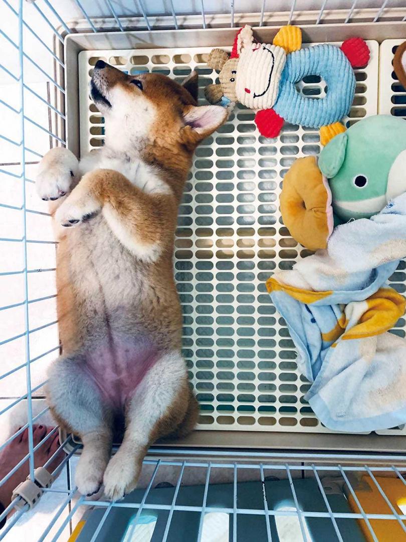 雖然玉米個性和Yumi截然不同,但胸下到胯下的胎記,竟和Yumi的手術疤痕十分像,讓秦綾謙感到不可思議。(圖/秦綾謙提供)