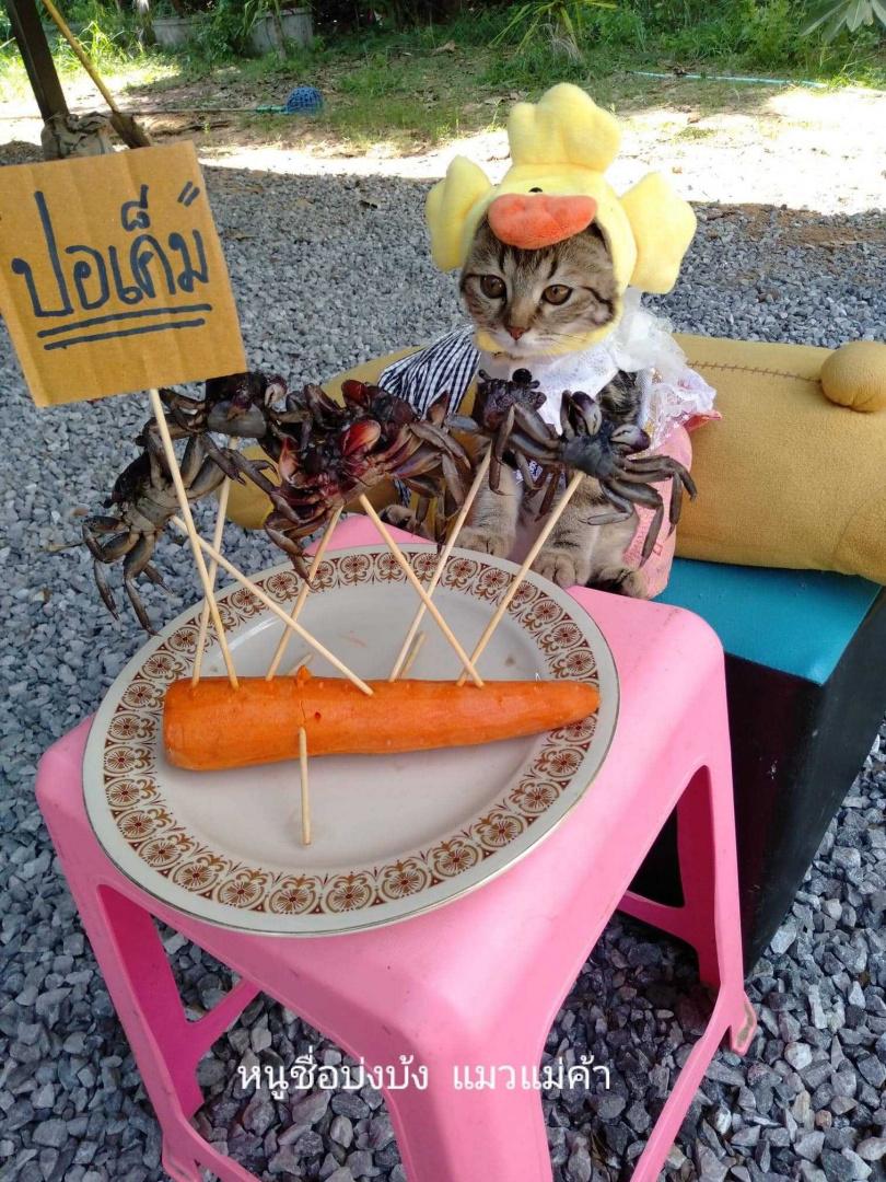 圖片來源:หนูชื่อบ่งบ้ง แมวแม่ค้า