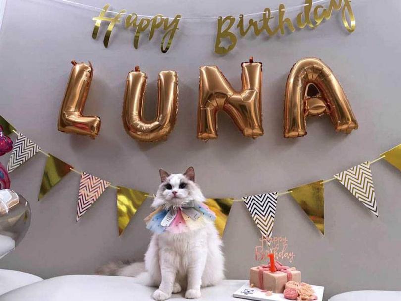 6月初剛滿1歲的Luna,之前完全沒有幼貓調皮搗蛋的行為,十分乖巧。(圖/翻攝自成語蕎臉書)