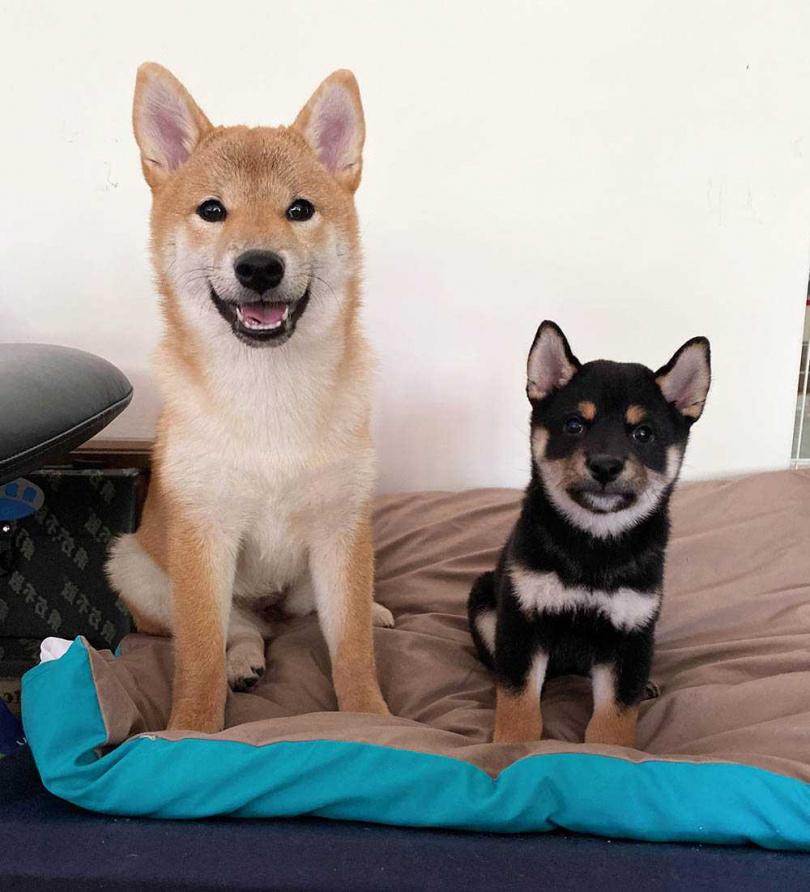 Olie和Milo個性南轅北轍,讓陳勢安的生活天天充滿歡笑。(圖/索尼音樂提供)