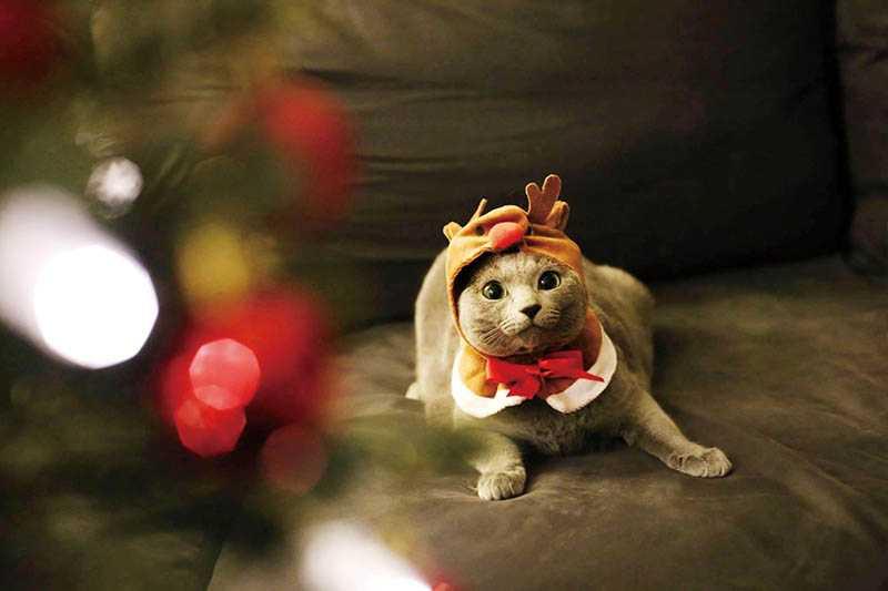 去年吳珝陽和毛孩們一起過耶誕節,還幫妹妹穿上可愛的麋鹿裝。(圖/吳珝陽提供)